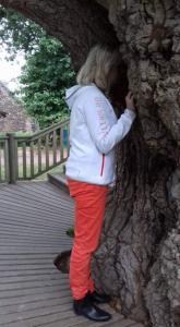 meditation, arbre